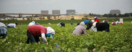 ouvriers-roumains-agences-de-travail-temporaire-roumaines-main-doeuvre-roumaine-agriculture-travaux-agricoles